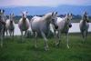 lhand1998 - Horzer horse breeder