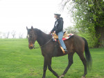 Trail Ride - Male Thoroughbred (22 years)