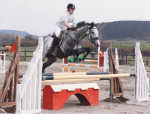 cyriann - Male Thoroughbred (7 years)