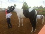Moons R Eternal - American Paint Horse (10 years)