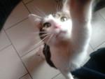 Tigrou - Male Cat (4 years)