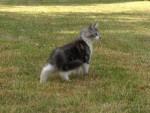 Premier pas au jardin - Cat