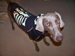 Carly - Dog (2 years)