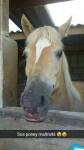 Comtesse - (8 years)