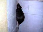 Escalade - Mouse