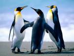 ben,tyler,maddi,rio - Penguin (3 years)