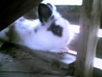 Noël - Male Rabbit (2 years)